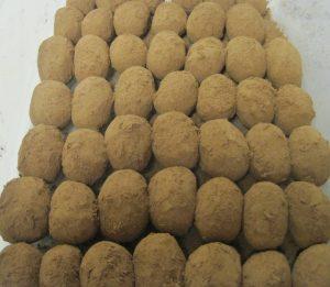 Irish Potato Rows